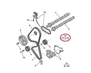 Hammasrihma komplekt OEM Peugeot/Citroen 1,6HDI DV6TED4