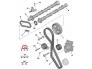 Hammasrihma komplekt OEM Citroen/Peugeot 2,0HDI DW10BTED4